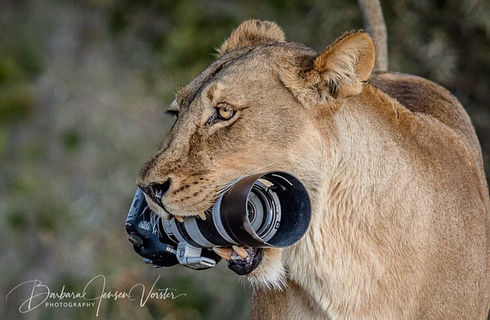 What happened to Barbara who dropped a Canon 7D in front of lion group