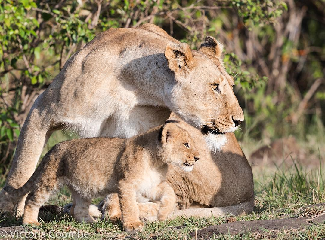 Victoria Coombe - I just love seeing how protective a wild animal can be with its young