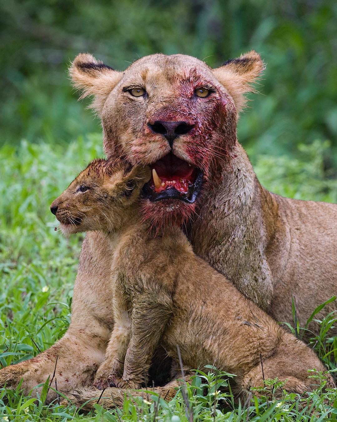 This is by far the most dramatic wildlife photograph ever taken by Mark.